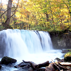 紅葉の奥入瀬渓流を散策。五感で味わう秋の旅。