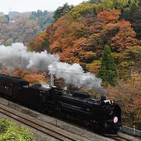 SLと紅葉、現代アートに日本酒も満喫! 2016年秋に乗りたい、楽しい列車をご紹介!