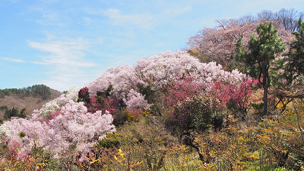 hanamiyama_02.png